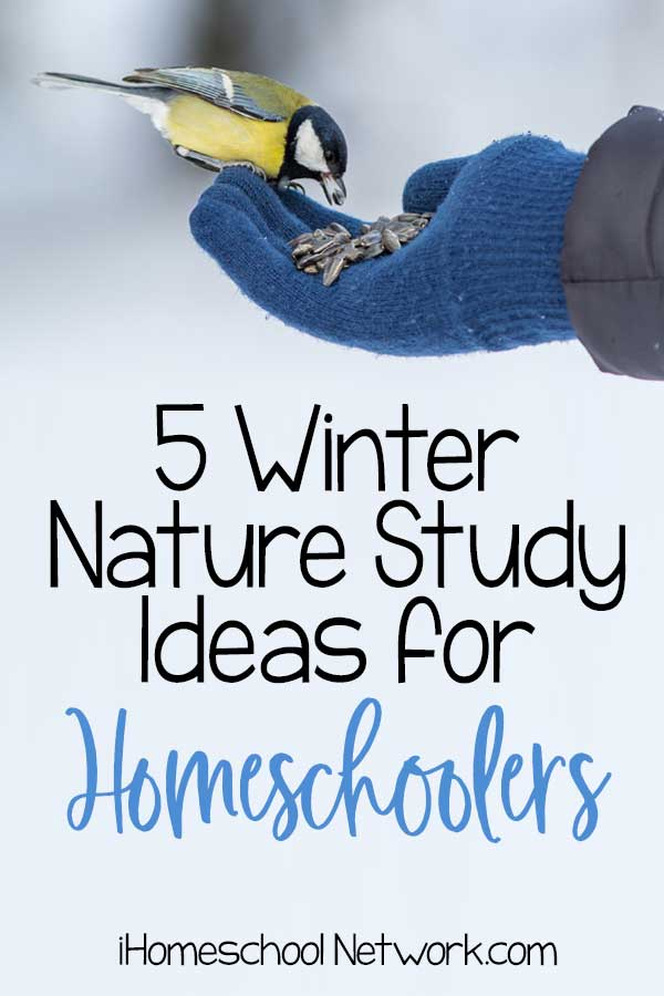 5 Winter Nature Study Ideas