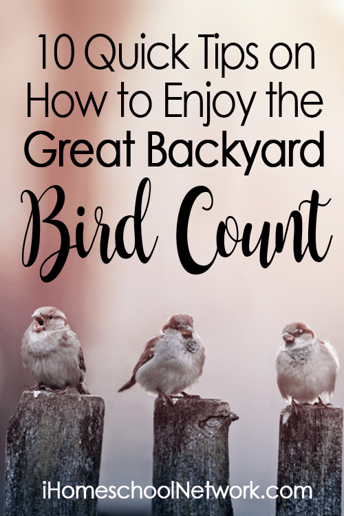 10 Quick Tips on How to Enjoy the Great Backyard Bird Count