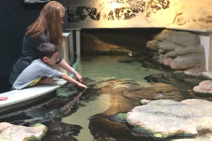 sting ray touch tank on aquarium field trip