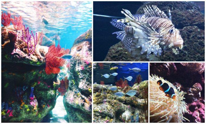 NC Aquarium homeschool field trip
