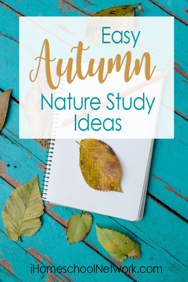 Easy Autumn Nature Study Ideas