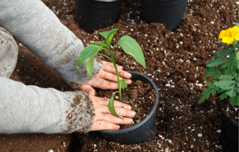 Gardening as science and fit into many homeschooling styles
