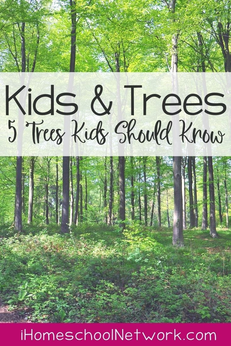 Kids and Trees - 5 Trees Every Kid Should Know